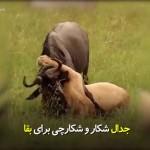 جدال شکار و شکارچی برای بقا. 😓