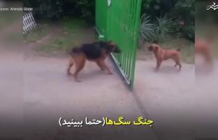 جنگ سگها (حتما ببینید) 😅😅