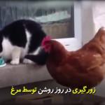 زورگیری در روشن توسط مرغ