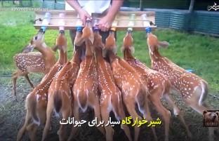 شیرخوارگاه سیار برای حیوانات