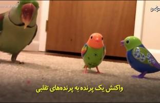 واکنش طوطی به پرندههای تقلبی