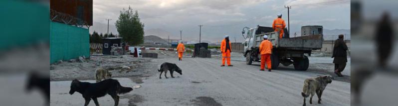 ابتکار جدید؛ شهرداری کابل سگهای ولگرد را عقیم میسازد