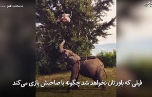 دوستی جالب فیل با صاحبش