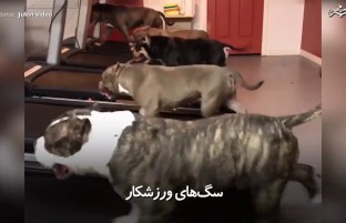 زمانی که سگها به فکر سلامتی شان میشوند