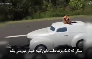 سگی که کمک راننده شده است