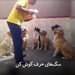 سگهای حرف شنو