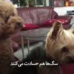 سگها هم حسادت میکنند. 😂😂😂