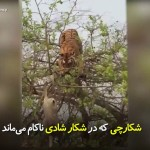 شکارچی که درشکار شادی ناکام ماند