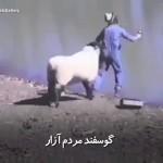 گوسفند مردم آزار