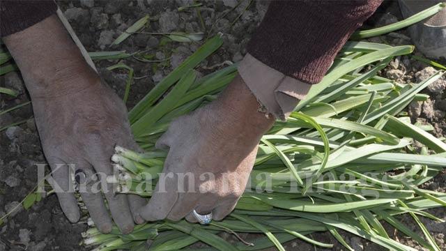 life-in-farm5