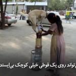 حتی سگ نیز که آموزش ببیند این گونه متبحر میشود، در این ویدئو ببینید