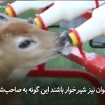 روش جالب برای تغذیهی حیوانات