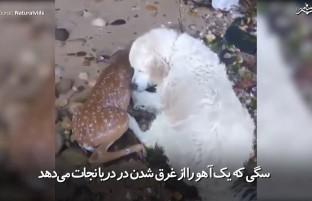 زمانی که حیوانات برای نجات همدیگر تلاش میکنند