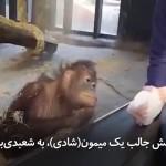 زمانی که میمون (شادی) با کار شعبدهباز از شدت خنده از حال میرود
