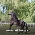 زیبایی حیرت انگیز یک اسب