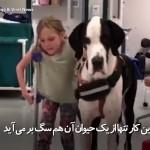 سگ با وفا که عصای دختر معلول میشود