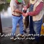 پیرمردی که در چشم به هم زدنی ماهی 16 کیلوگرامی را صید میکند