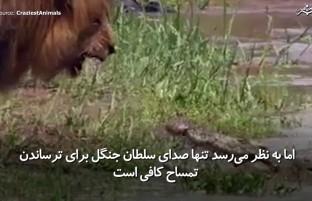 ترسیدن تمساح با صدای سلطان جنگل
