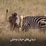 دیدنیهای حیات وحش