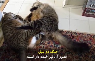 زمانی که دو تنبل با هم می جنگند
