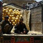 معضل صادرات؛ فاسد شدن 18 تُن خربوزه افغانستان در تاجکستان