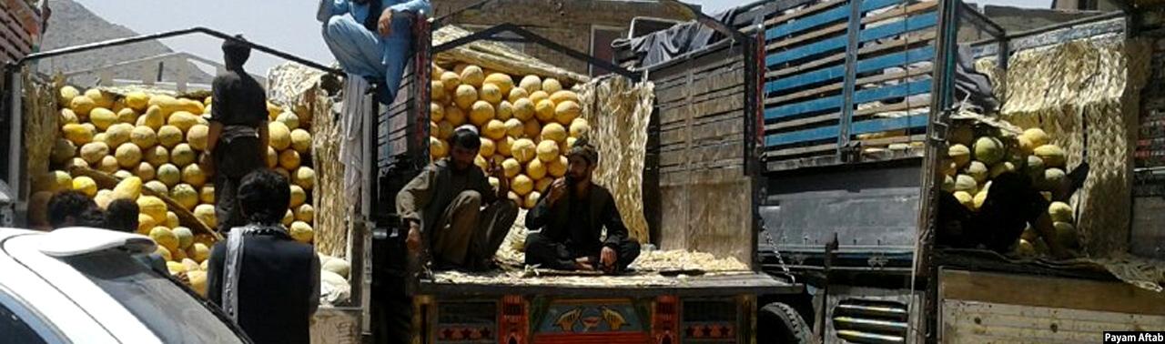 معضل صادرات؛ فاسد شدن ۱۸ تُن خربوزه افغانستان در تاجکستان