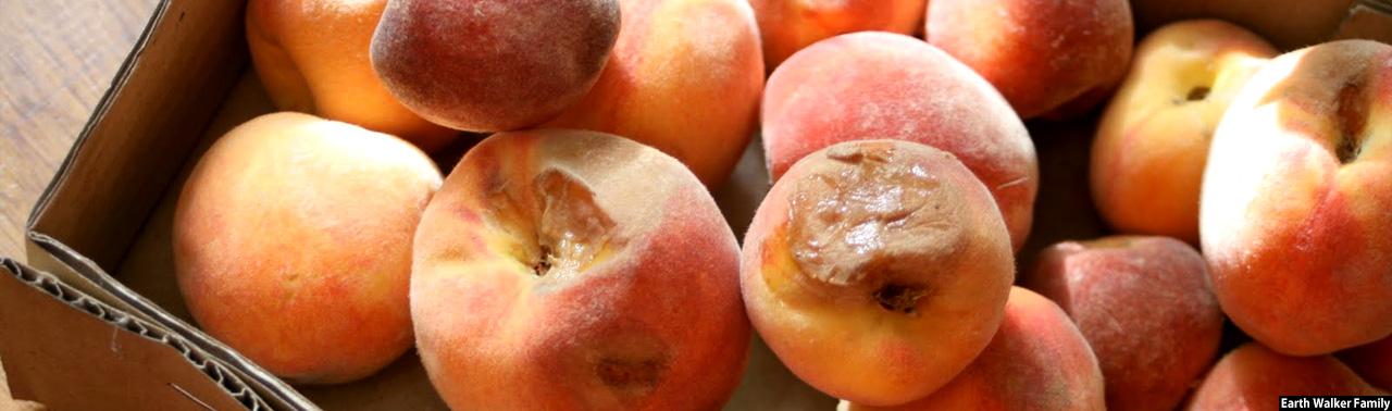 اتاق تجارت و صنایع: حکومت افغانستان در پرداخت خسارات بازرگانان میوه همکاری میکند