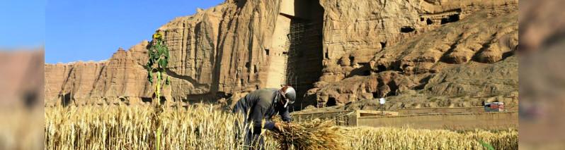 استراتژی ملی گندم؛ تازهترین تلاش برای خودکفایی تولید این محصول در افغانستان
