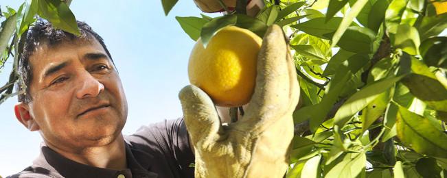 برنامه ملی باغداری؛ از حضور در ٣٠٠ شهرستان تا پوشش ۵۵ هزار کشاورز در افغانستان