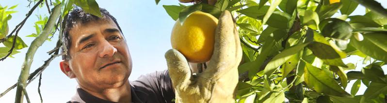 روش جدید باغداری؛ روزنهای برای توسعه محصولات و افزایش شغل در روستاهای افغانستان