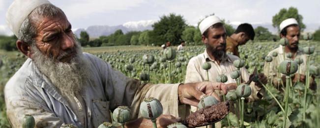 جنگ تریاک؛ ورود آمریکا در نابودی منابع مالی شورشیان و تاثیر آن بر معادلات جنگ افغانستان
