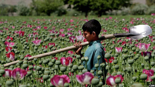opium3