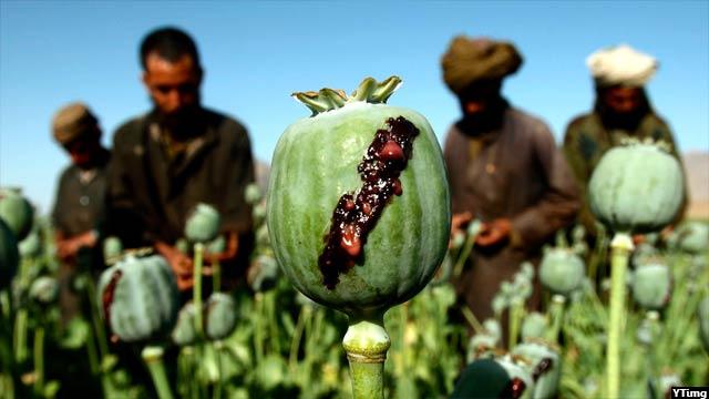 opium5