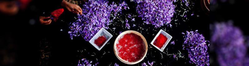 طلای سرخ افغانستان؛ زعفران تنها محصولی که از این کشور پیشخرید میشود