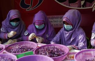 پایتخت زعفران افغانستان؛ سومین جشنواره گل زعفران و درآمد ۱۳ میلیون دالری کشاورزان هراتی