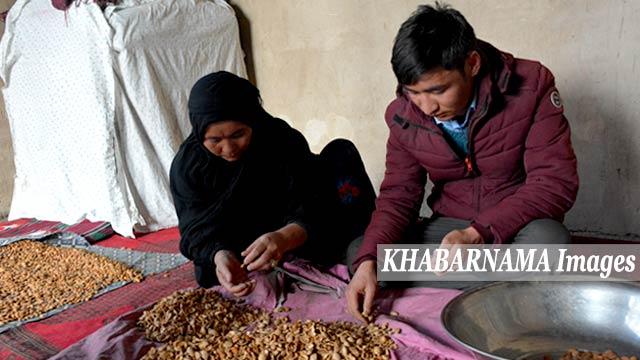 غلام حسین در کنار مادرش برای تامین مواد سوخت برای خانه پوست بادام میکشند