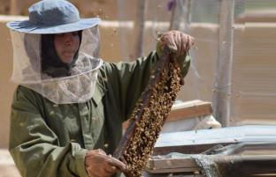 دختر کارآفرین بلخی؛ تولیدکننده عسل و تامین مخارج یک خانواده