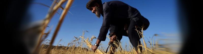 از خشکی زمستان تا برف بهار؛ بحران خشکسالی سراسری و احتمال فاجعه اقتصادی در مرکز افغانستان