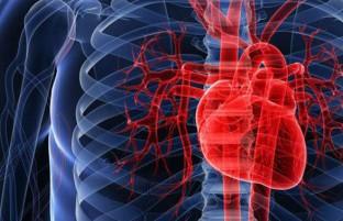 با ورزش قلب سالم داشته باشید؛ ۷ نکته مهم در این مورد بدانید!