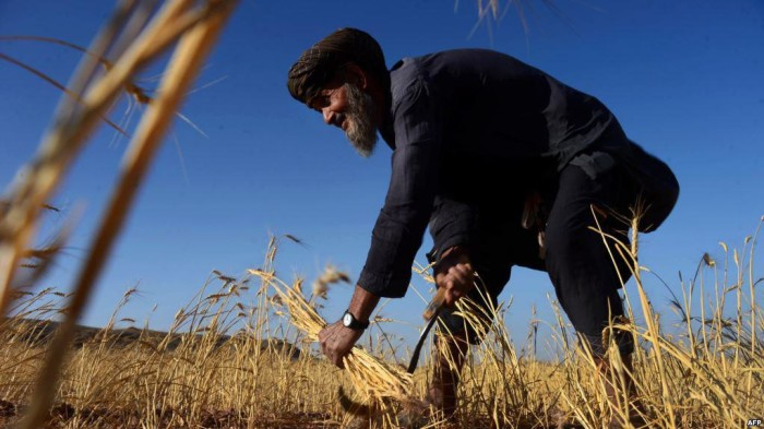 خشکسالی یک مشکل بزرگ در سراسر افغانستان است، اما چالشی نیست که امروز به وجود آمده باشد