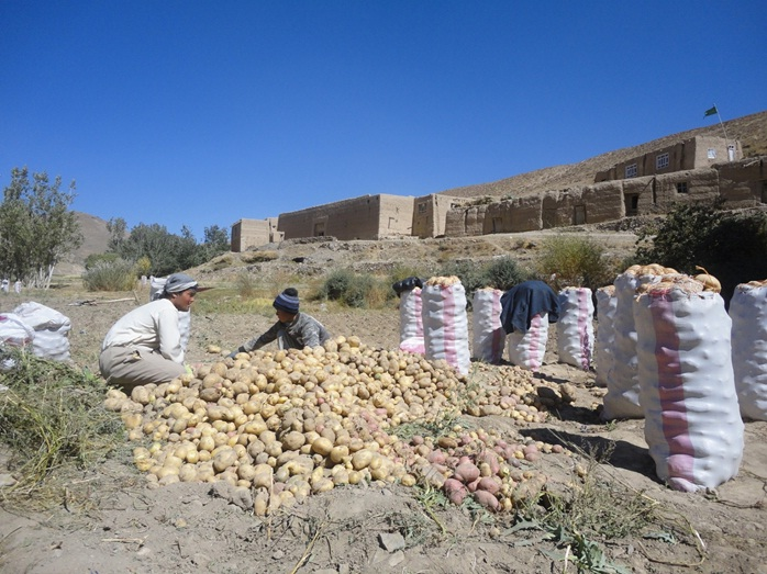 bamiyan potatos