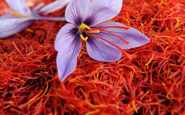 saffron_flower