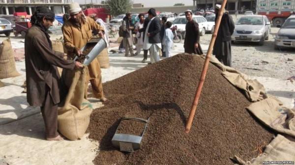 اکبر رستمی میگوید که آنان در بخش منابع طبیعی، برای اولینبار در سال جاری خورشیدی، جلغوزه سیاه بهنام خود افغانستان به چین صادر شد