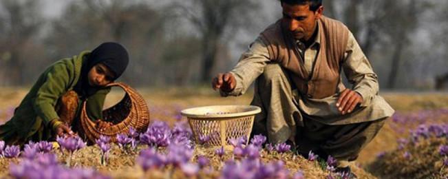 سال ۹۷؛ کارکردهای حکومت افغانستان در بخش کشاورزی
