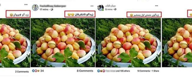 راز کاسه پر زردالو؛ سوژه جالب و مورد توجه بسیاری از کاربران فیسبوک در افغانستان