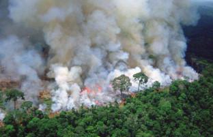 برزیل، بولیوی و پارگوئه در حالت اظطرار: روایت تصویری از آتش سوزی در جنگل های آمازون