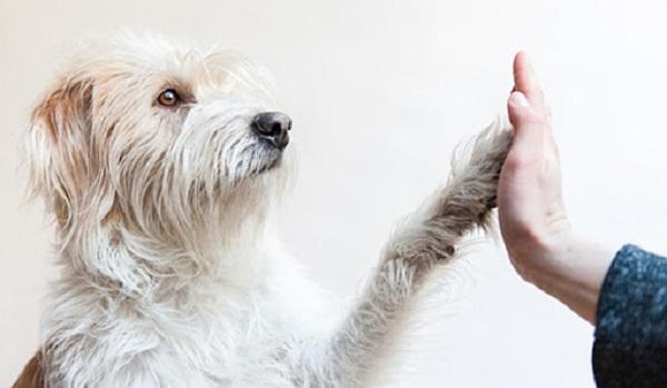 بر مبنای تحقیقات باستانشناسان، سگ نخستین حیوان است که به دست انسان اهلی شده .