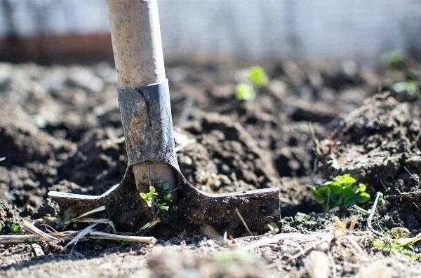 خوردن خاک در واقع نوع دیگری از اختلال هرزهخواری است.