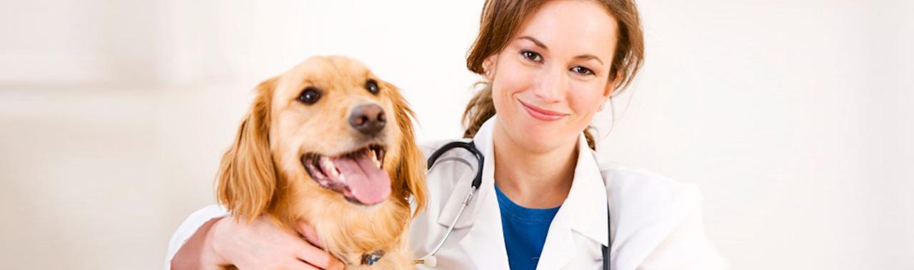 استفاده از حس بویایی سگ ها، شیوه جدید تشخیص کرونا