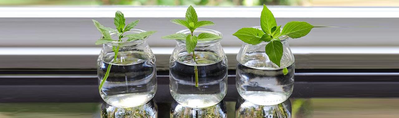 ۶ گیاه دارویی مغذی که میتوانید در آب پرورش بدهید (بدون نیاز به خاک)